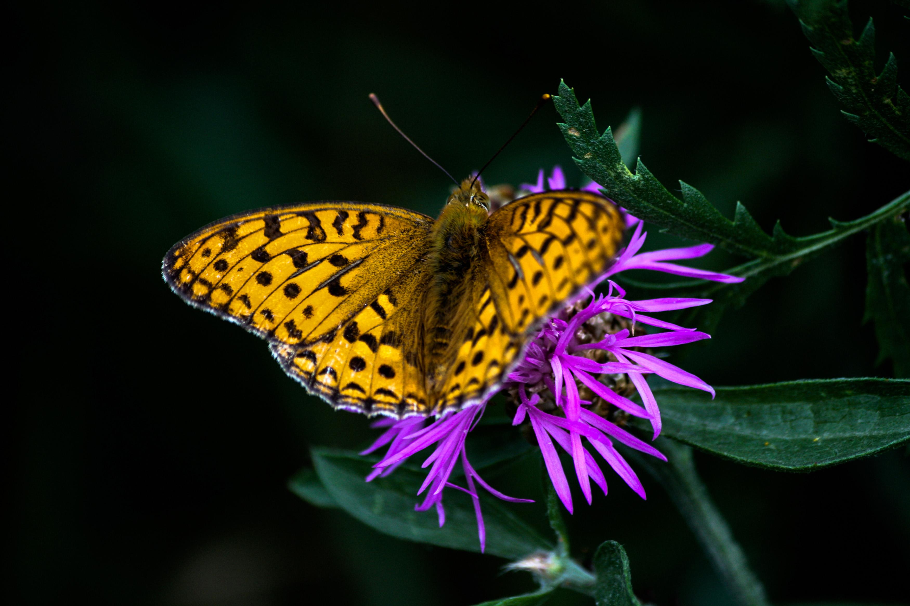 01_Butterfly_Reijo Hovilainen